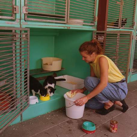 Animal keeper in a cat shelter